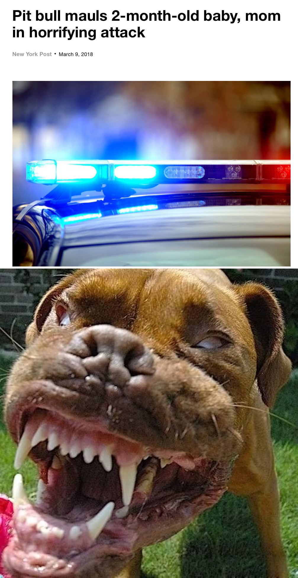 pit bulls are they really the monsters They had a well-deserved reputation as nanny dogs, and stories of pit bulls attacking humans were unheard of before the 1980s, there is only one incident, in 1947, when a pack of pit bulls killed a woman, but the only reason they did that is because a human made them do it.